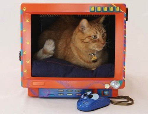 monitor_casa de gato