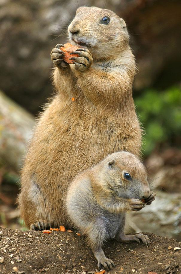 animais-versoes-miniatura-5