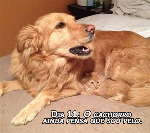 gatos-dominando-mundo-19