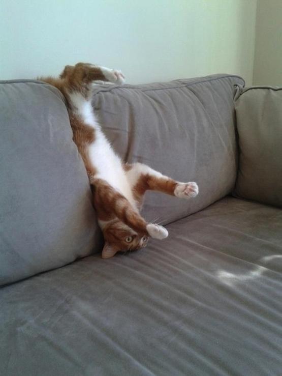 gatos-esquecidos-1