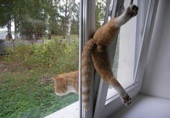 gatos-esquecidos-25