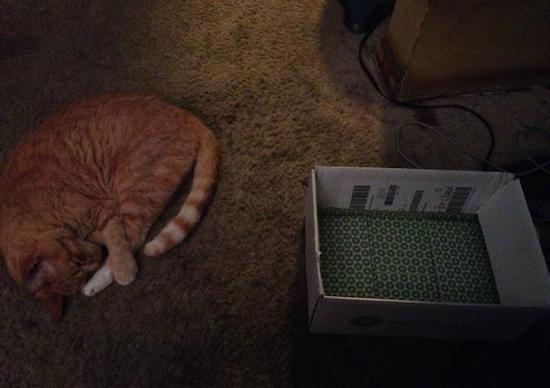 gatos-esquecidos-7
