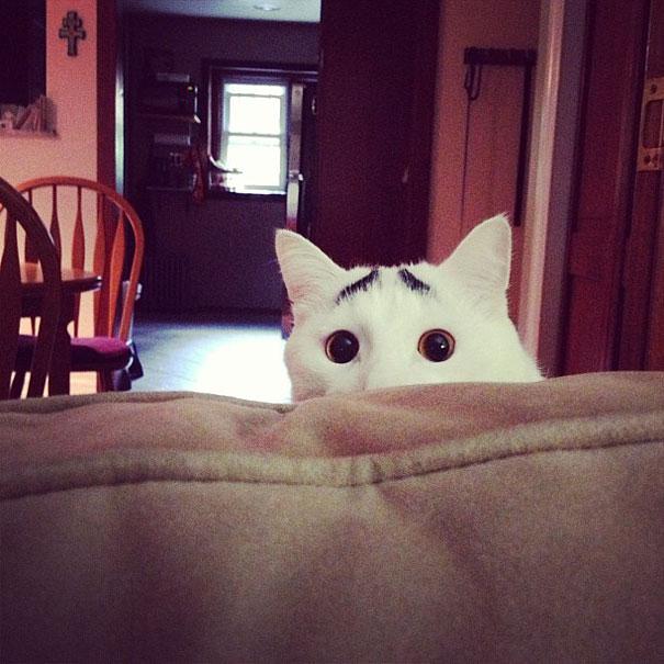gatos-marcas-incriveis-1-2