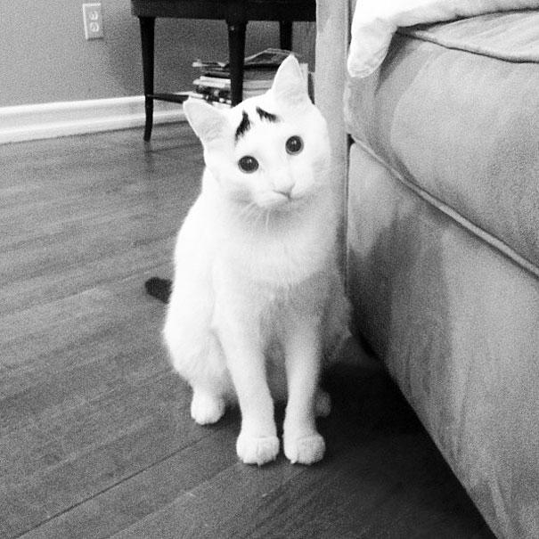 gatos-marcas-incriveis-1