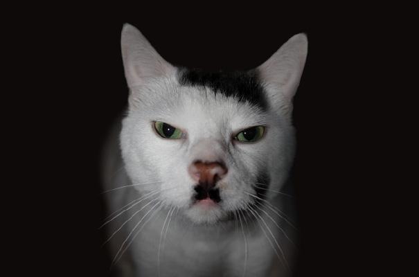 gatos-marcas-incriveis-10