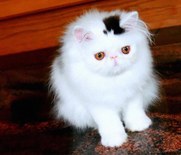 gatos-marcas-incriveis-2