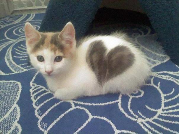 gatos-marcas-incriveis-3
