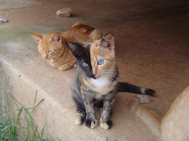 gatos-marcas-incriveis-5