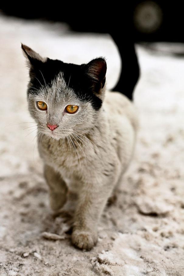 gatos-marcas-incriveis-6
