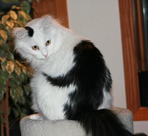gatos-marcas-incriveis-8