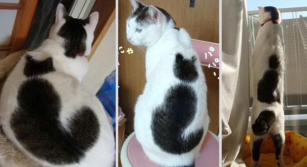 gatos-marcas-incriveis-9-1