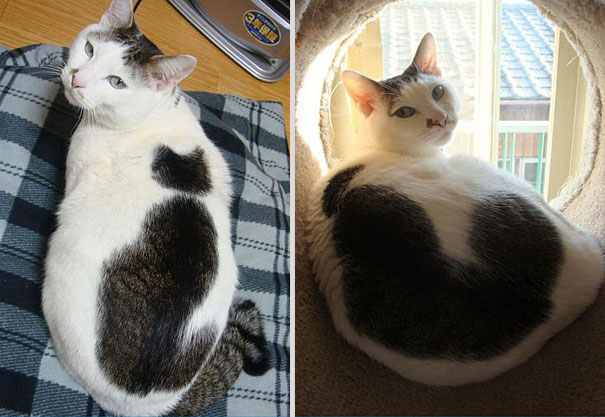 gatos-marcas-incriveis-9