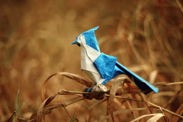 autumn-blue-jay-origami