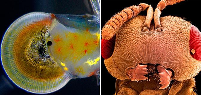 9 Coisas sensacionais (e macabras) ao serem aumentadas com um microscópio