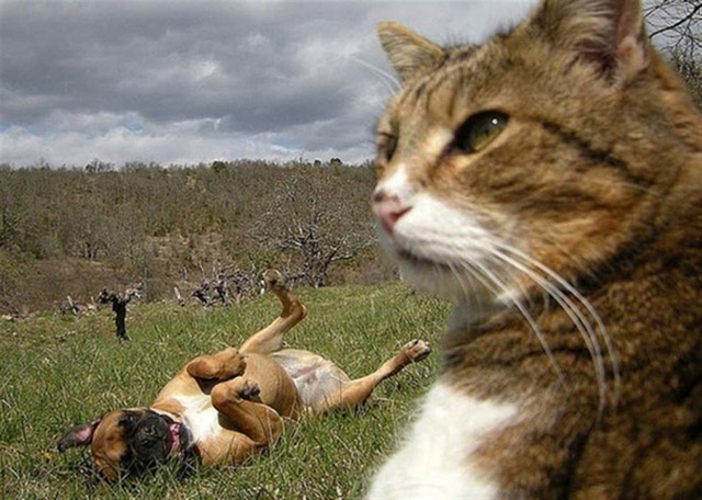 gatos-selfies-14