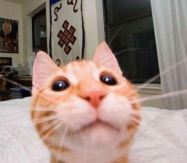 gatos-selfies-19