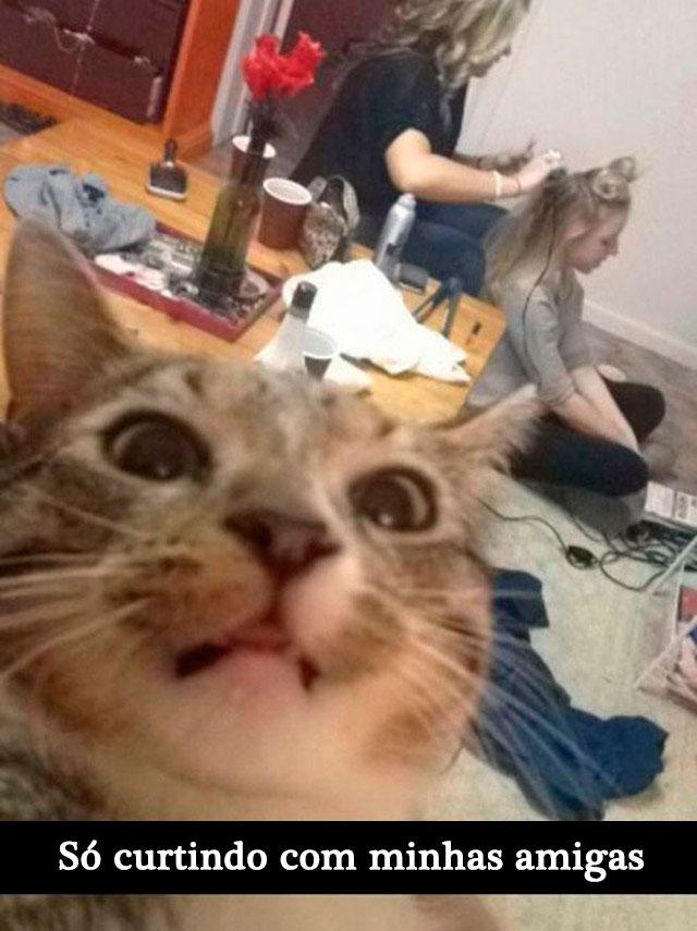 gatos-selfies-20-1