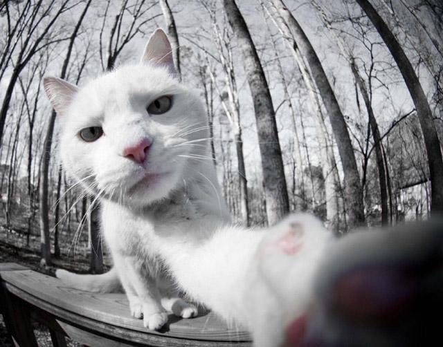 gatos-selfies-8