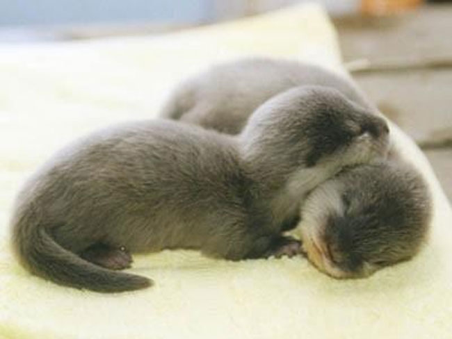 loving-animals-using-each-other-as-pillows-my-heart-has-melted-completely-11