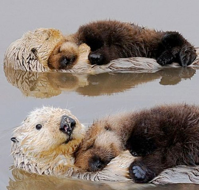 loving-animals-using-each-other-as-pillows-my-heart-has-melted-completely-26