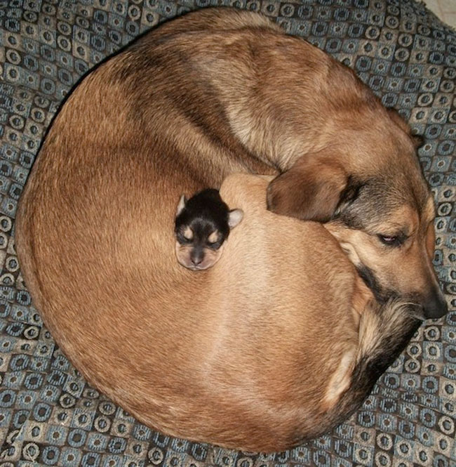 loving-animals-using-each-other-as-pillows-my-heart-has-melted-completely-7 (1)
