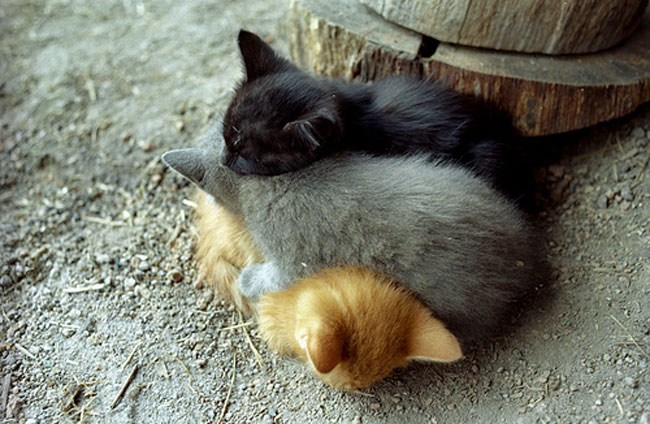 loving-animals-using-each-other-as-pillows-my-heart-has-melted-completely-9