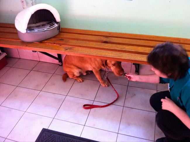 cachorros-veterinario-10