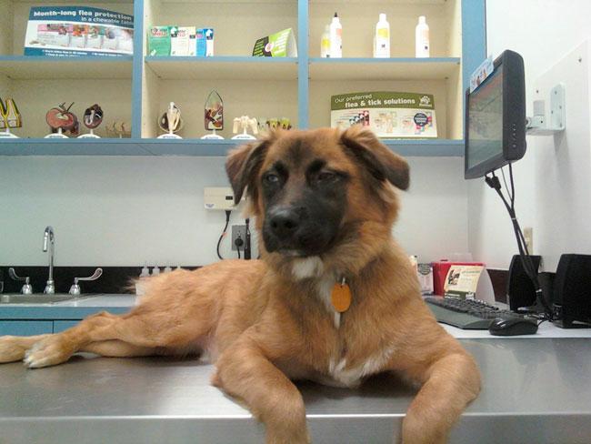 cachorros-veterinario-20
