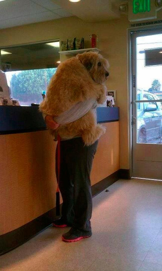 cachorros-veterinario-3