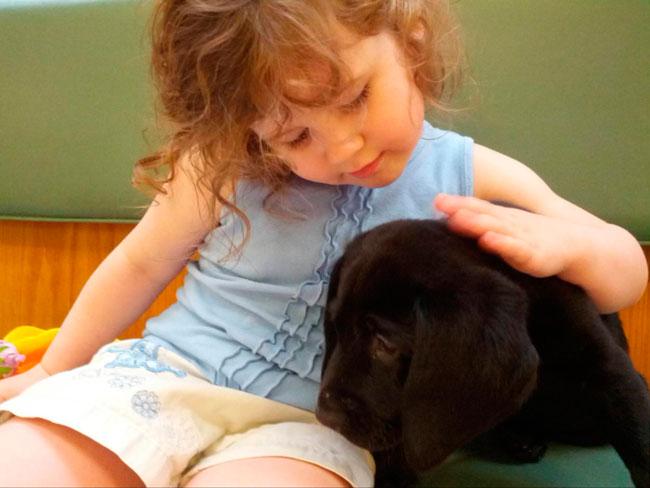 cachorros-veterinario-8
