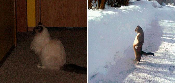 36 Gatos curiosamente fascinados por… PAREDES!