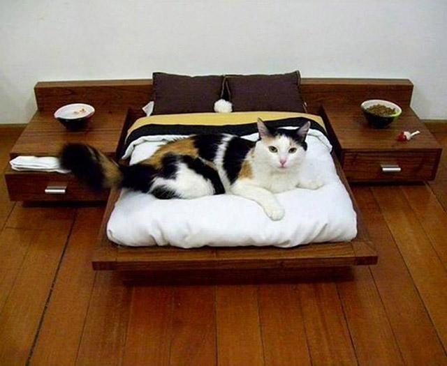 casas-caes-gatos-14