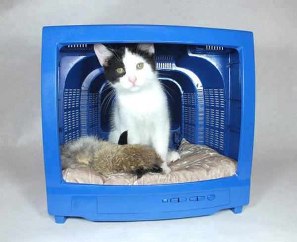 casas-caes-gatos-4-1