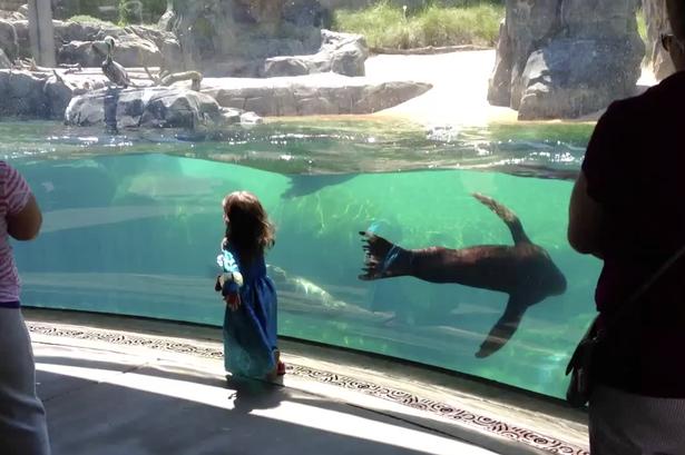 Veja a reação deste leão-marinho quando sua nova amiguinha cai