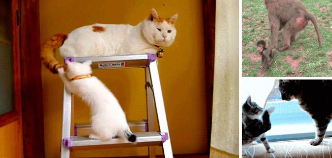 Прикольные коты гифки, сайты