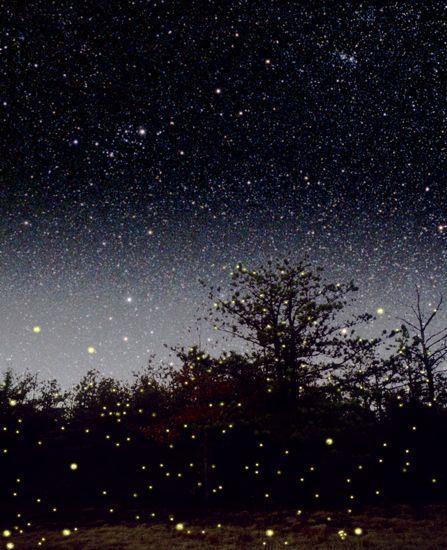 night_tudo_interessante_4d