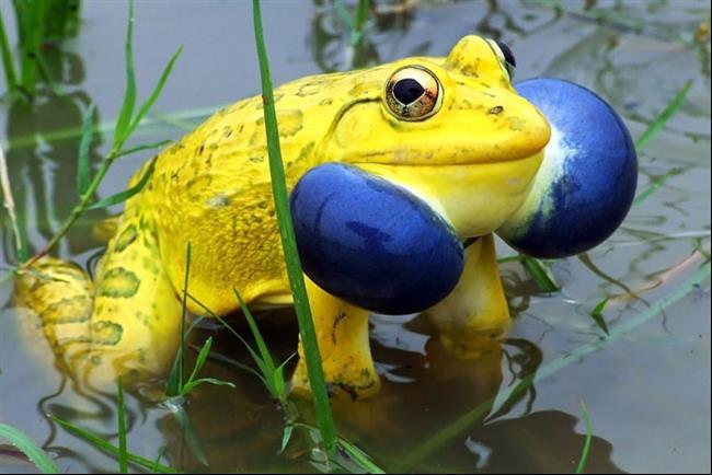 animais-coloridos-2