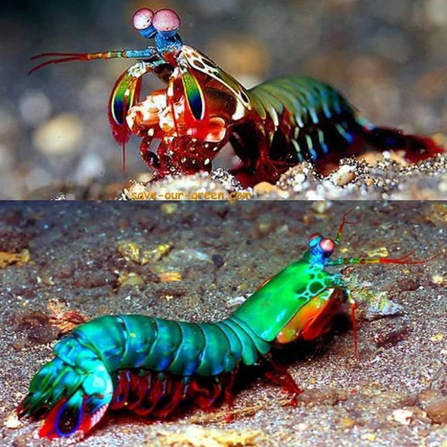 animais-coloridos--20