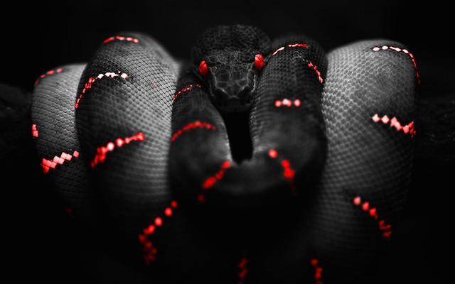 animais_perigosos10