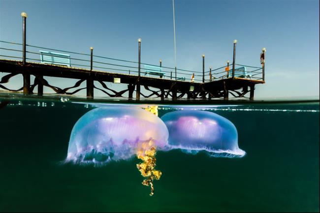 embaixo-d'água-10