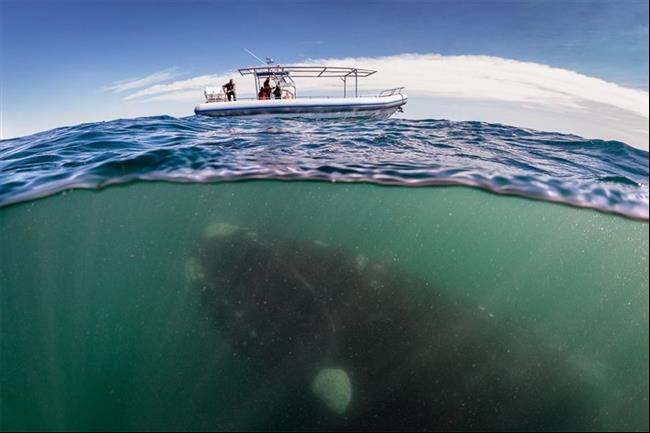 embaixo-d'água-1