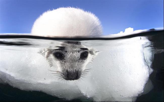 embaixo-d'água-18
