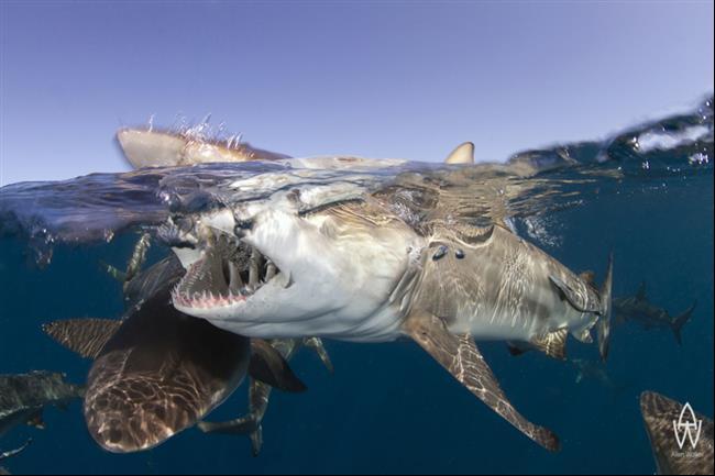 33 Fotos revelando o que há abaixo da superfície da água em várias partes do mundo