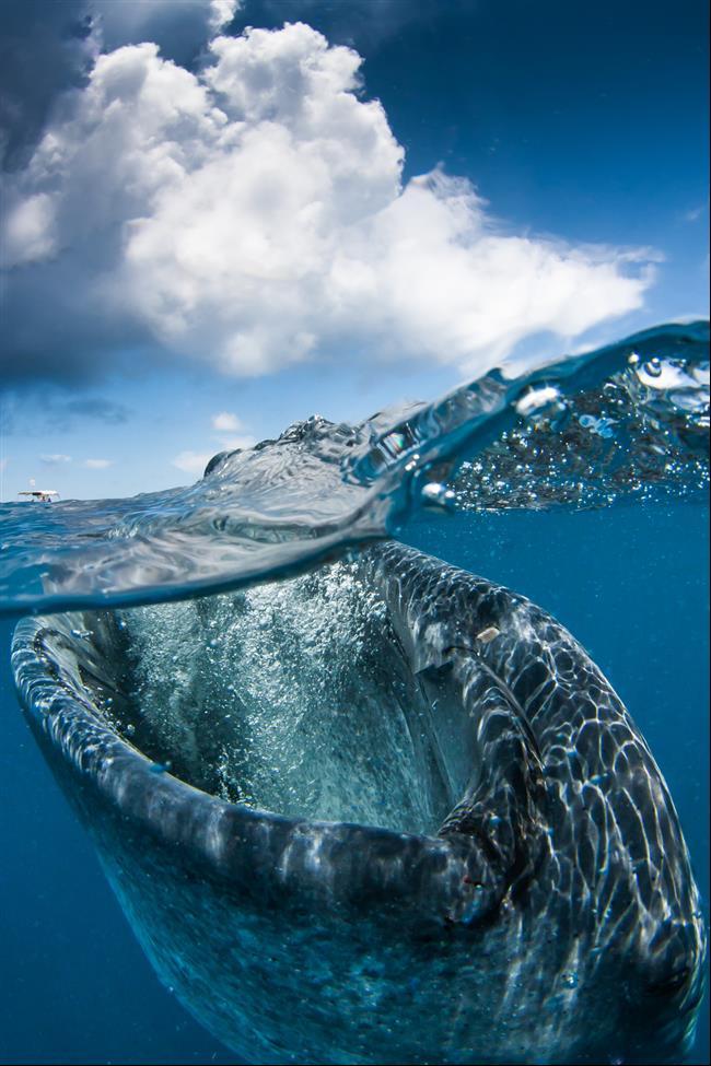 embaixo-d'água-30