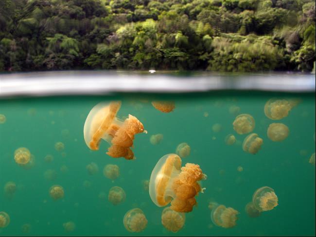 embaixo-d'água-6