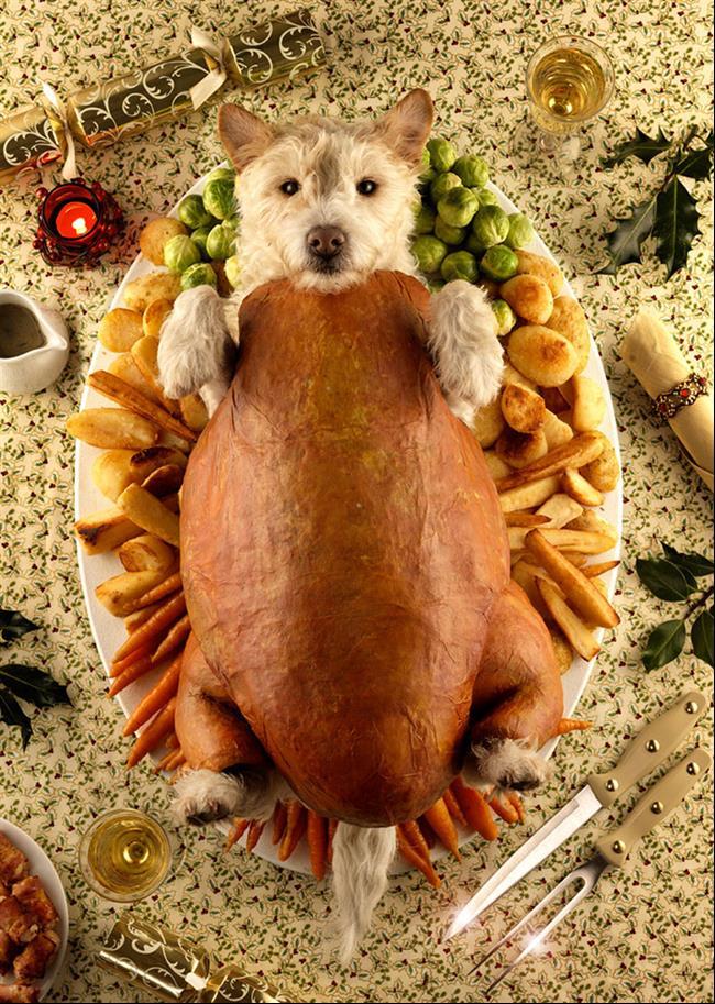 cachorro-cartão-de-natal-06
