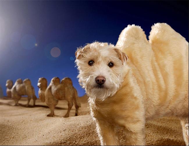 cachorro-cartão-de-natal-08