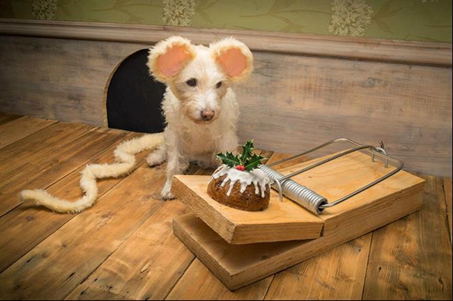 cachorro-cartão-de-natal-1