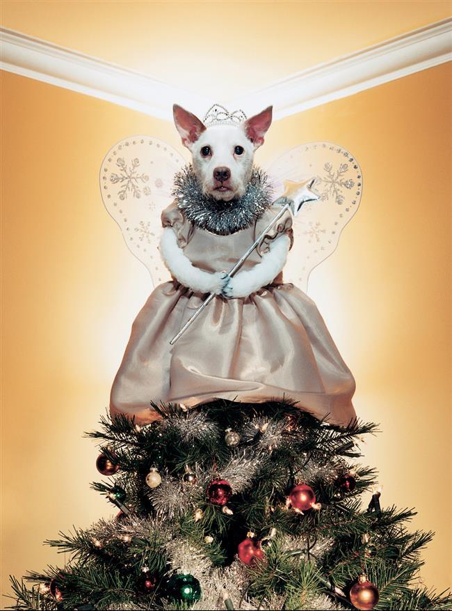 cachorro-cartão-de-natal-10