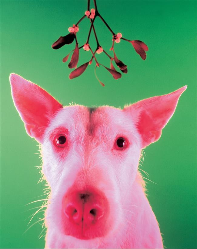 cachorro-cartão-de-natal-11